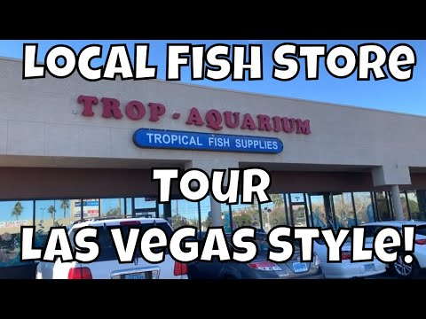 LOCAL FISH STORE TOUR TROP AQUARIUM LAS VEGAS