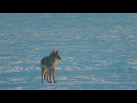 Frozen North- Music by SubArctic Wolf Tools & Outdoors