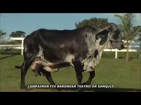 LOTE 51 CAMPAINHA FIV BARONESA TEATRO DA SANQUIT