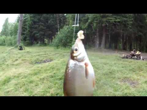 Рыбалка в Карелии Река Шуя Матросы 16 Июля 2017 года/Fishing In Karelia Shuya River Sailors July 16
