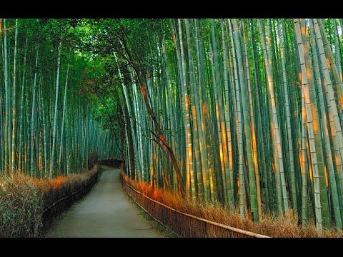Фотообои Бамбуковый лес на стену купить в интернет магазине