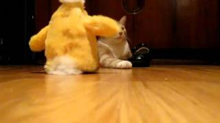 Kitty could care less about a dancing chicken Thumbnail
