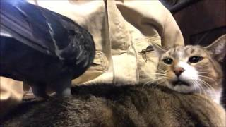Cat and Pigeon are BFF's