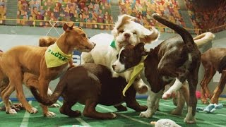 Power Puppies   Puppy Bowl