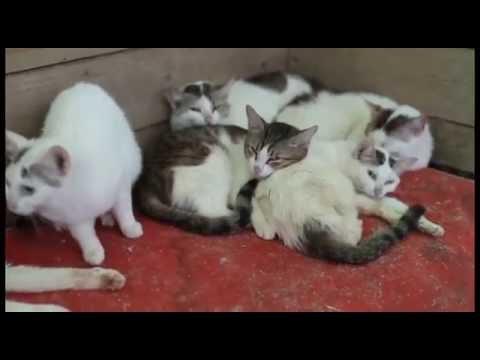можно глистить кошку когда она беременна