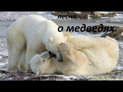 Песня о медведях (cover)