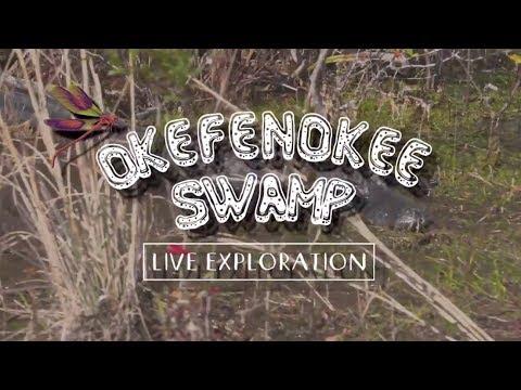 Okefenokee Swamp Live Exploration - Full Episode