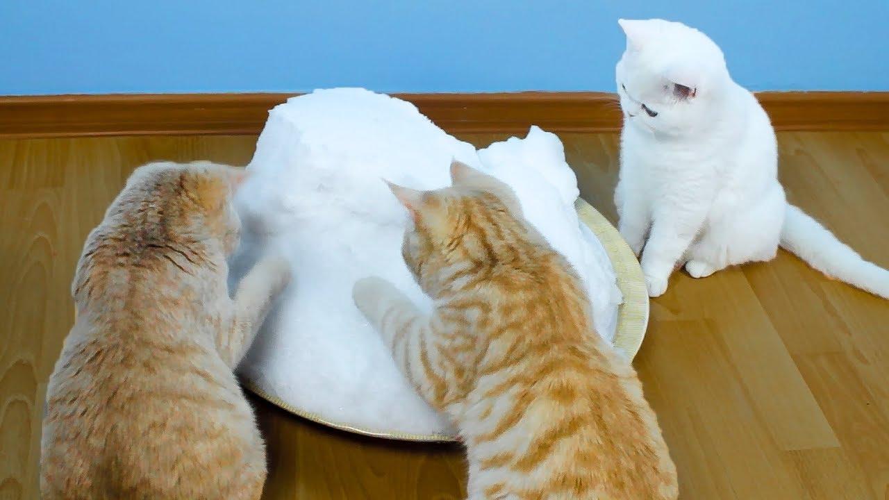 Katzen Sahen Zum Ersten Mal Schnee