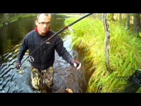 ловля окуня осенью в карелии