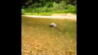 初めて深い所を泳ぎ、ドヤ顔.