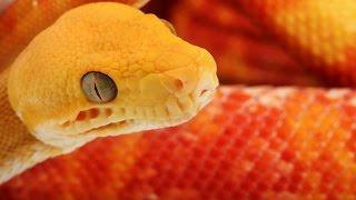 Красота Змей (Документальные фильмы, передачи HD)