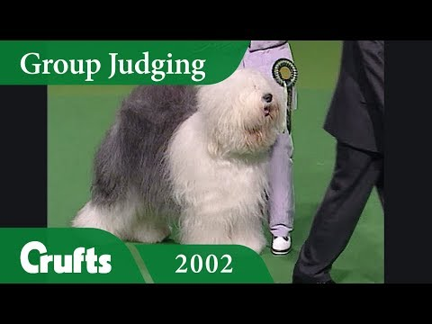 Old English Sheepdog wins Pastoral Group Judging at Crufts 2002