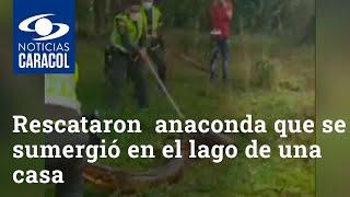 Rescataron una anaconda de 5 metros que se sumergió en el lago de una casa