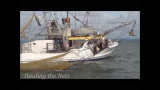 Moreton Bay Prawn Trawling - Bay Prawns