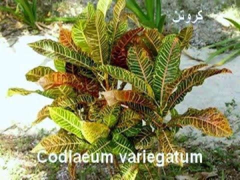 أسماء نباتات الزينة المناسبة للمنزل نباتات الظل والتنسيق الداخلى