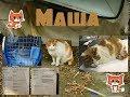 #Помощь бездомным котикам. Маша