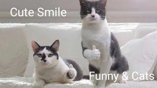 Funny & Cats - รวมน้องแมวน่ารัก # 19