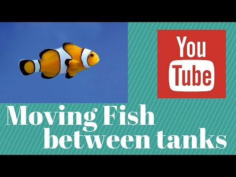 how to move saltwater fish from one aquarium to another
