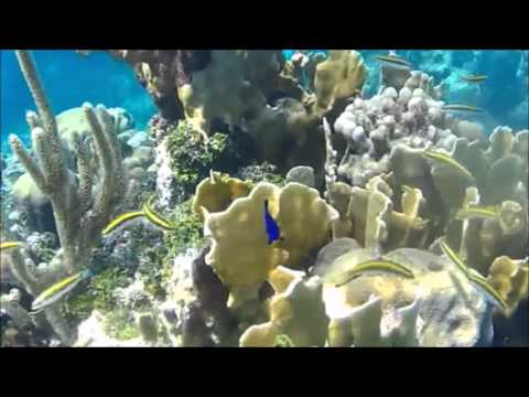 Roatan Excursions, Roatan Snorkeling Charters