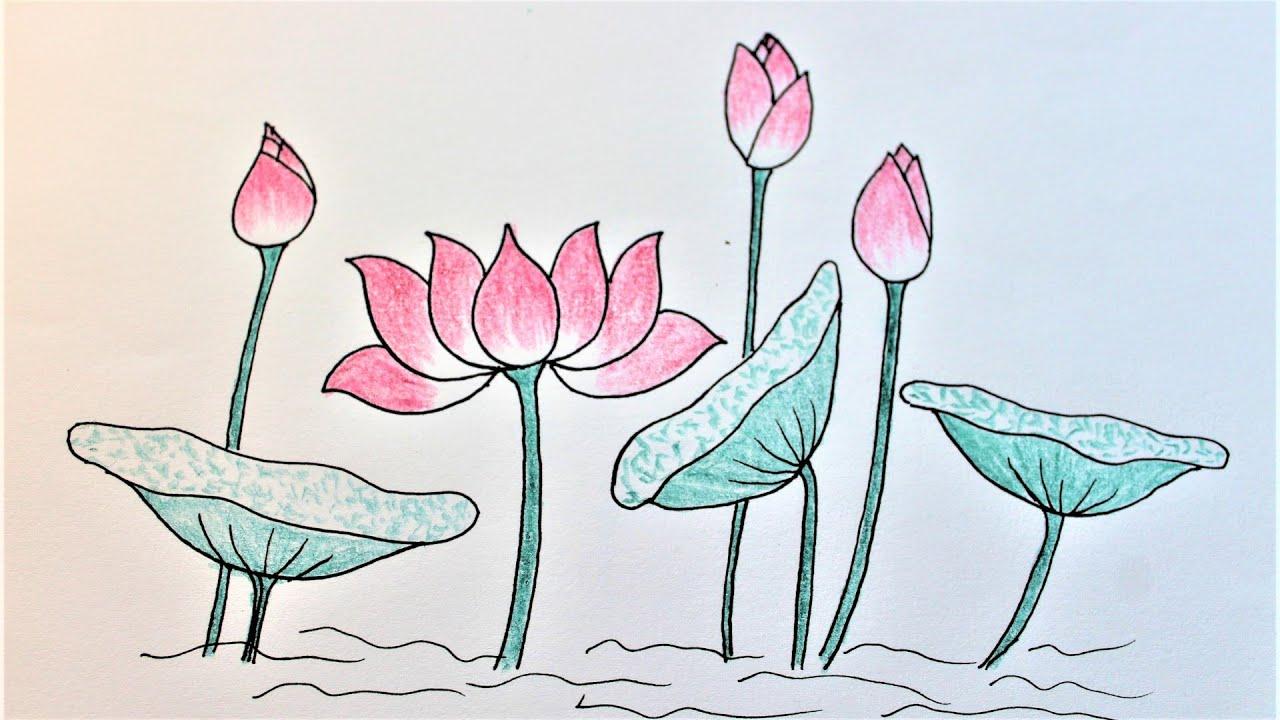 How to draw lotus   Hướng dẫn cách vẽ hoa sen và nụ sen đẹp   Step by step flower drawing tutorial