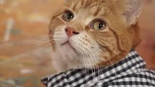 Keyboard Cat 3 heads