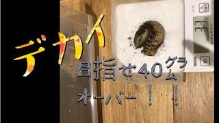 デカイ幼虫を求めて、埼玉県飯能に来ました!さてさて、いるかなあ?? ...