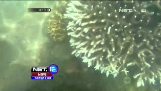 Demi Melestarikan Ekosistem Bawah Laut NTB, Pecinta Lingkungan Lakukan Tranplantasi Karang - NET12