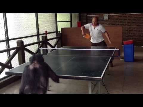 Monkey Plays Ping Pong 2