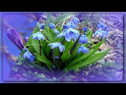 СКОРО ВЕСНА!  (Enya - Pale Grass Blue)