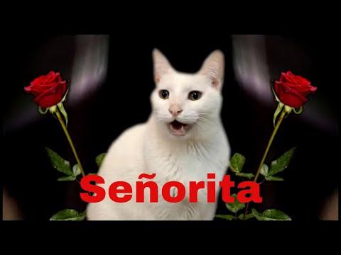 Señorita - CATS sing Camila Cabello & Shawn Mendes