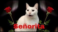 Senorita - CATS sing Camila Cabello & Shawn Mendes