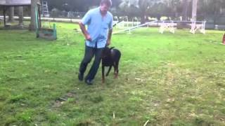 Florida Dog Academy - Basic Obedience Training With Doberman Vader (03)