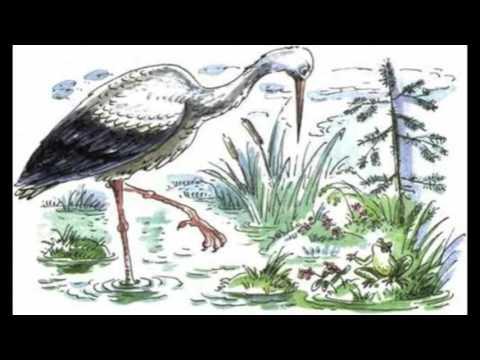 Басня Аисты и лягушки