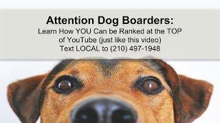 dog boarding near me