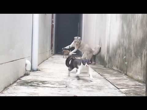 Look at this Cat how he dodged 3 Cats who wanted to catch him ...