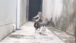 Look at this Cat how he dodged 3 Cats who wanted to catch him  Funny Escape