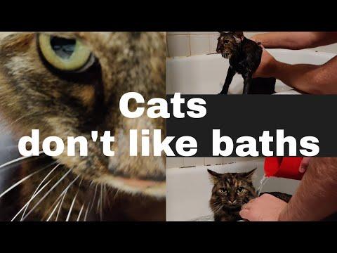 Cats don't like baths