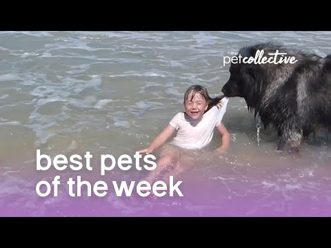 Best Pets of the Week | August 2018 Week 3