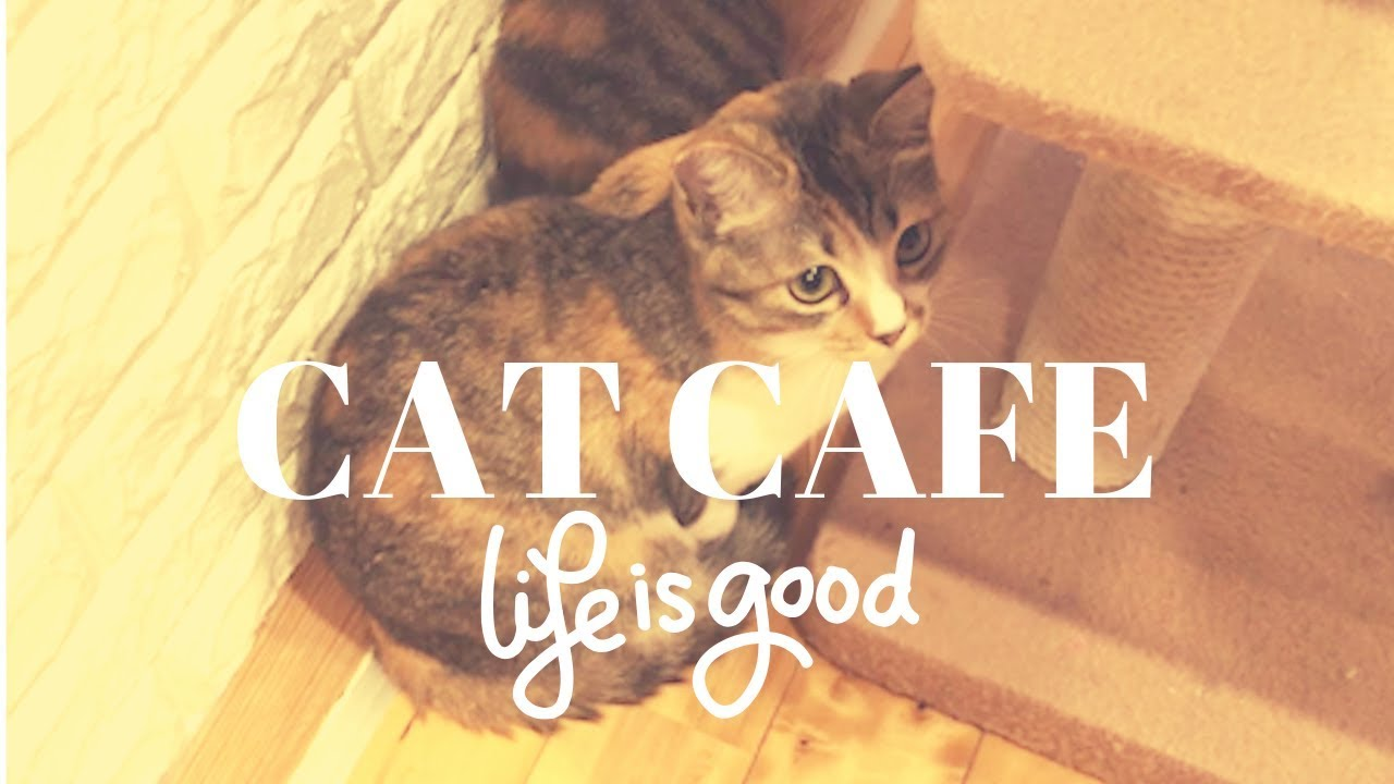 Cat Cafe in JAPAN!! they are so cute ! - J vlog 4