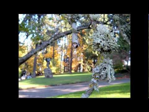 Autumn Roses - Washington Park Tour; Portland, Oregon.wmv