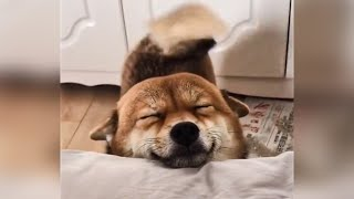 Funny animals  compilation #1  Best Of The 2020 Funny Animal Videos   Cutest Animals Ever