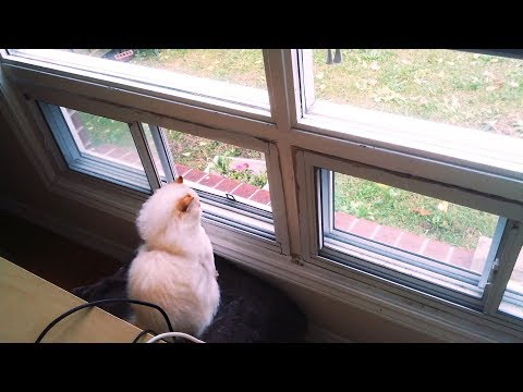 Himalayan Kitty: China watches the rain storm roll in