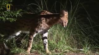 Дикая природа. Тайны Африки. Животные.