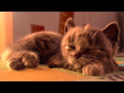 Little Kitten &