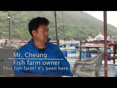 [CCST9021] Fish Farm: More Than Just Rearing