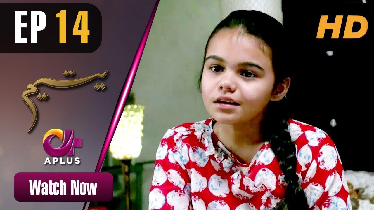 Download Yateem - Episode 14 | Aplus Dramas | Sana Fakhar, Noman Masood, Maira Khan | Pakistani Drama
