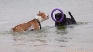 Собаки на море! Дрессировка собак всех пород в Одессе, Суворовский р-н. пос. Котовского.(, 2015-06-24T09:23:43.000Z)
