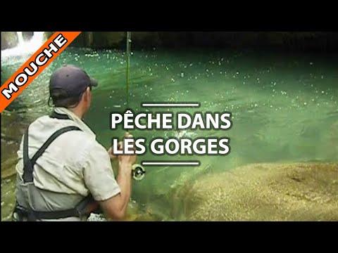 Quest-ce que cest la mélasse pour la pêche de vidéo