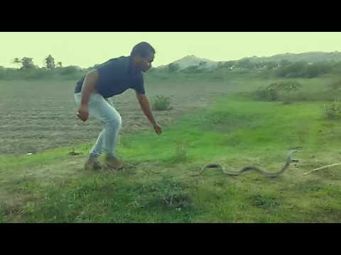 World's No.1 Snake catcher #SULTAN