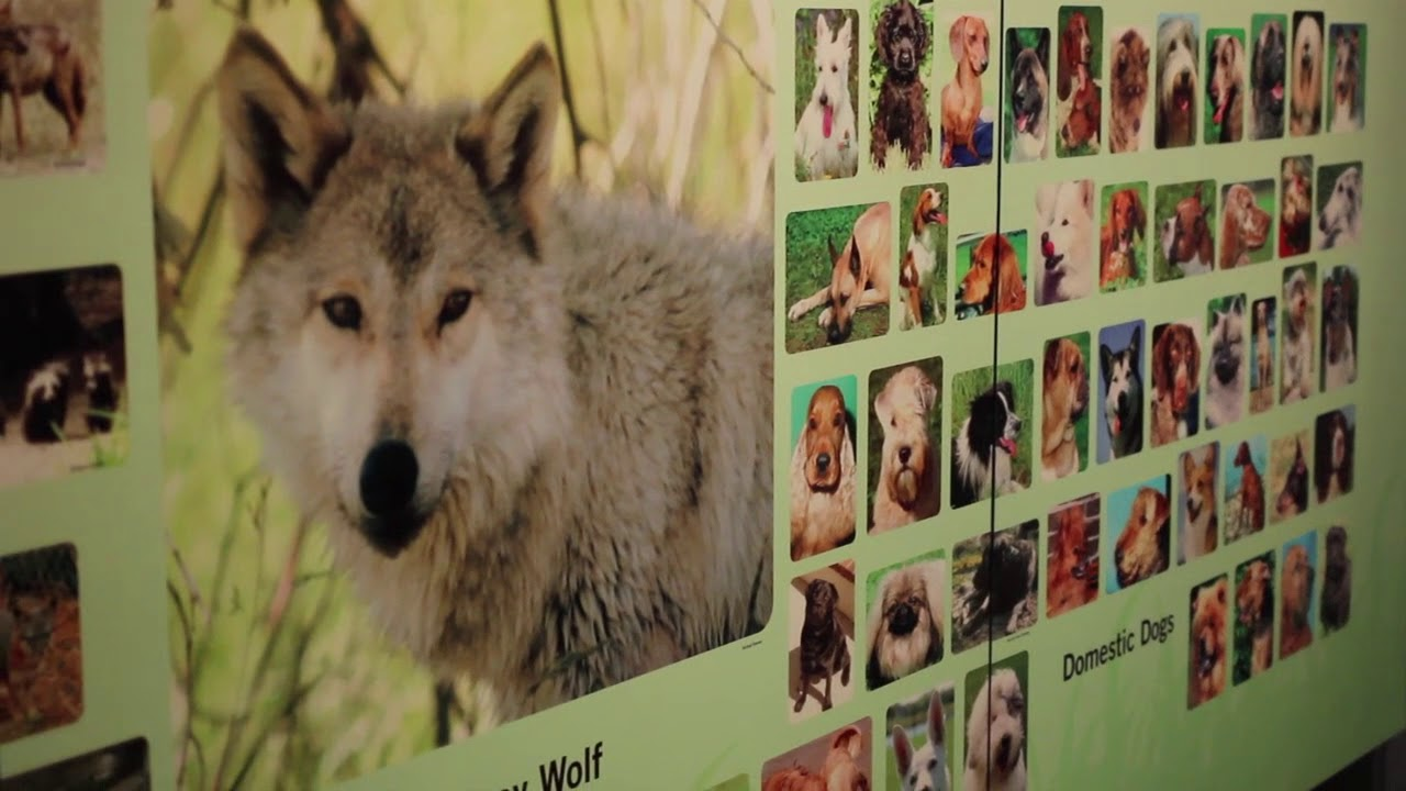 Wolf to Woof: The Story of Dogs | Wonder Works Exhibits